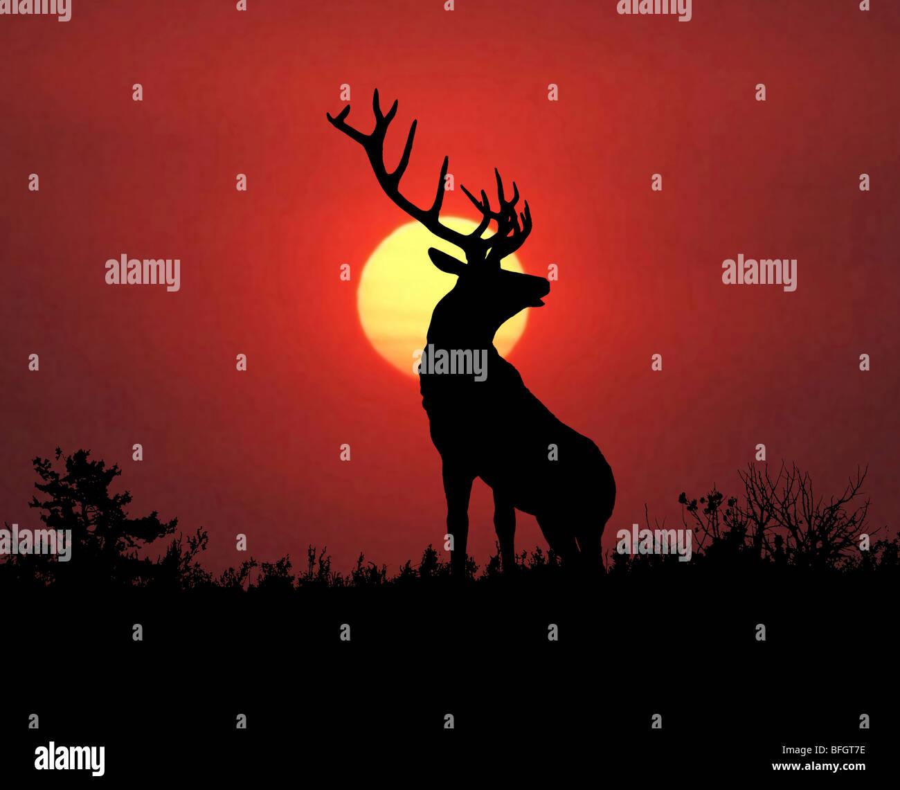 Bull elk sillouette at sunset. - Stock Image