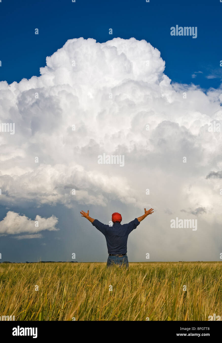 A man looks out over a barley field with a cumulonimbus supercell cloud, Bromhead, Saskatchewan, Canada Stock Photo