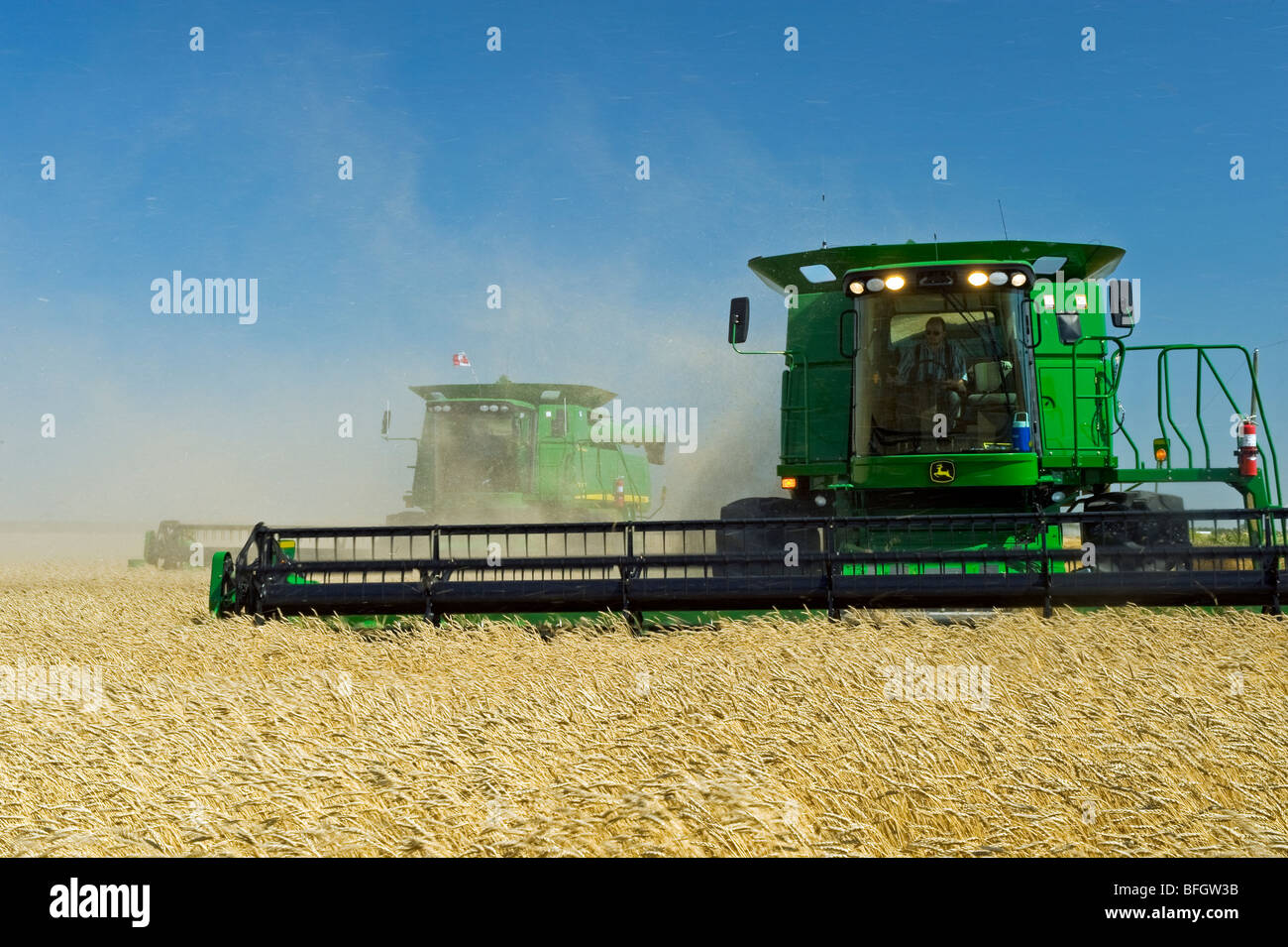 Two combine harvesters work a field of spring wheat, La Salle, Manitoba, Canada - Stock Image