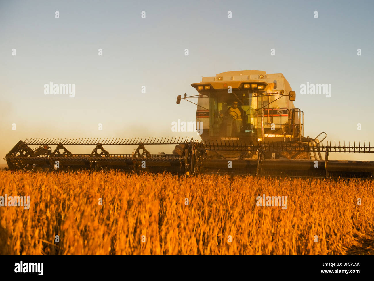 Combine harvester on soybean field in the early evening. Near Lorette, Manitoba, Canada - Stock Image