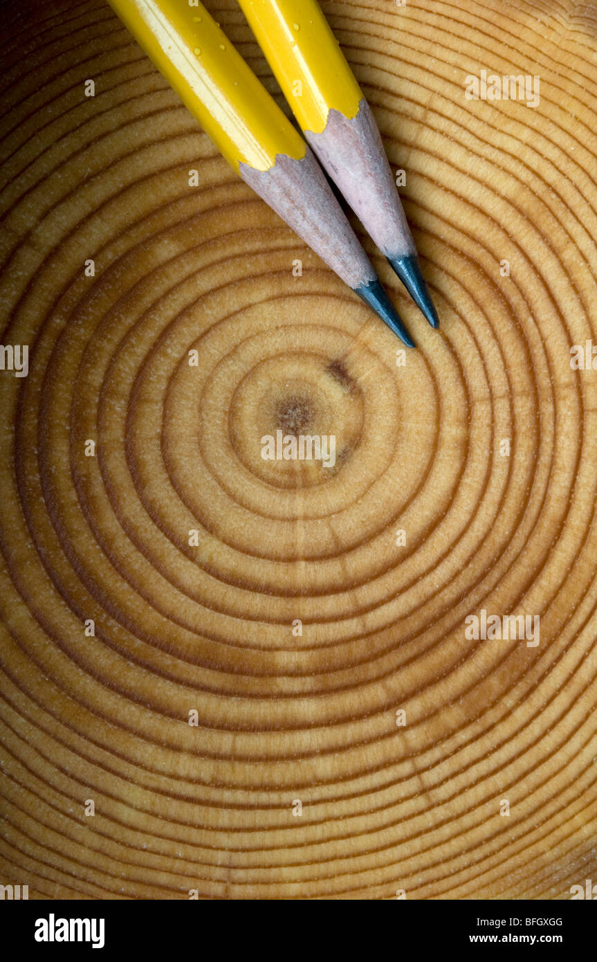 Annual tree growth rings for a Balsam Fir tree (Abies balsamea), Ontario, Canada - Stock Image