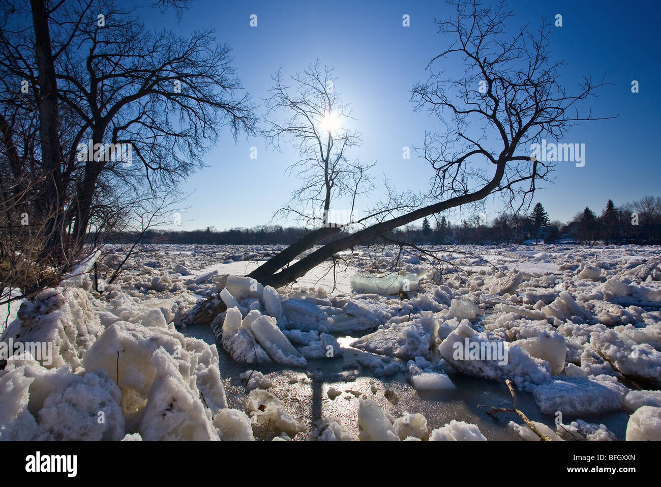 Ice Jam on the Red River, during 2009 flood.  Winnipeg, Manitoba, Canada. - Stock Image