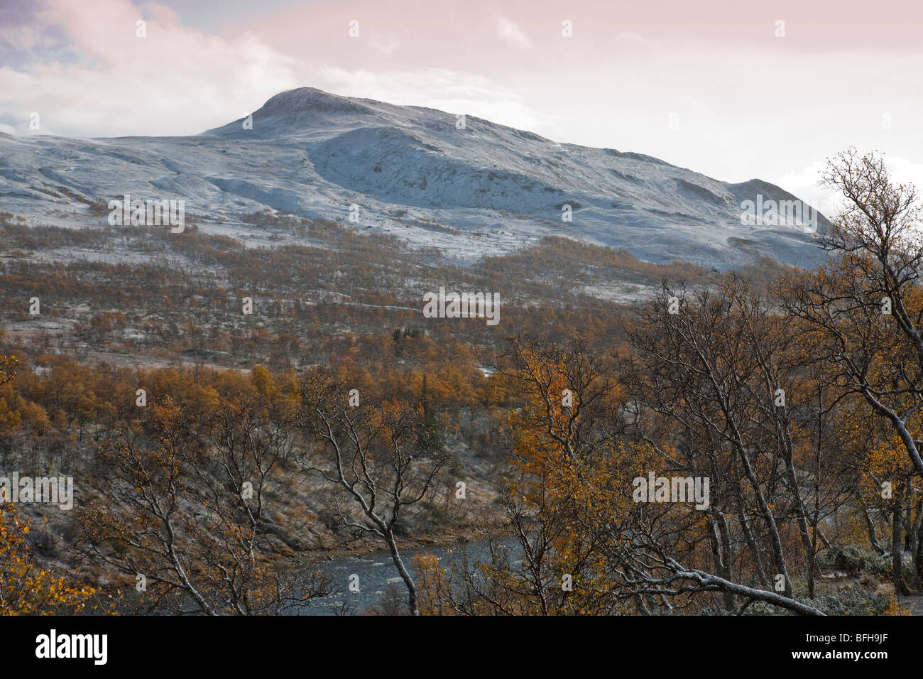 Sweden Jämtland Storulvån fjell seasons autumn fall winter snow first snow birch forest winter snowfall - Stock Image