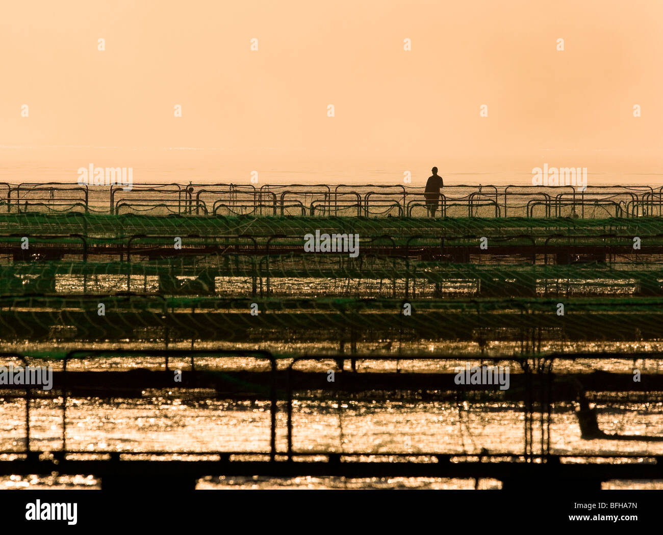 Lone fishfarm worker surveys his fish-pens in early morning light.  Nootka sound area Northern Vancouver Island - Stock Image