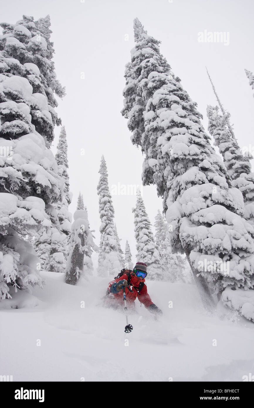 A female skier enjoys fresh snow and wide trees in the backcountry of Fernie B.C Stock Photo