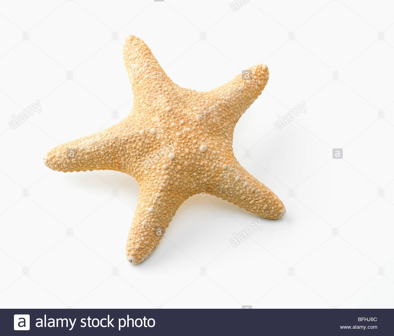 starfish dried and laid out flat - Stock Image
