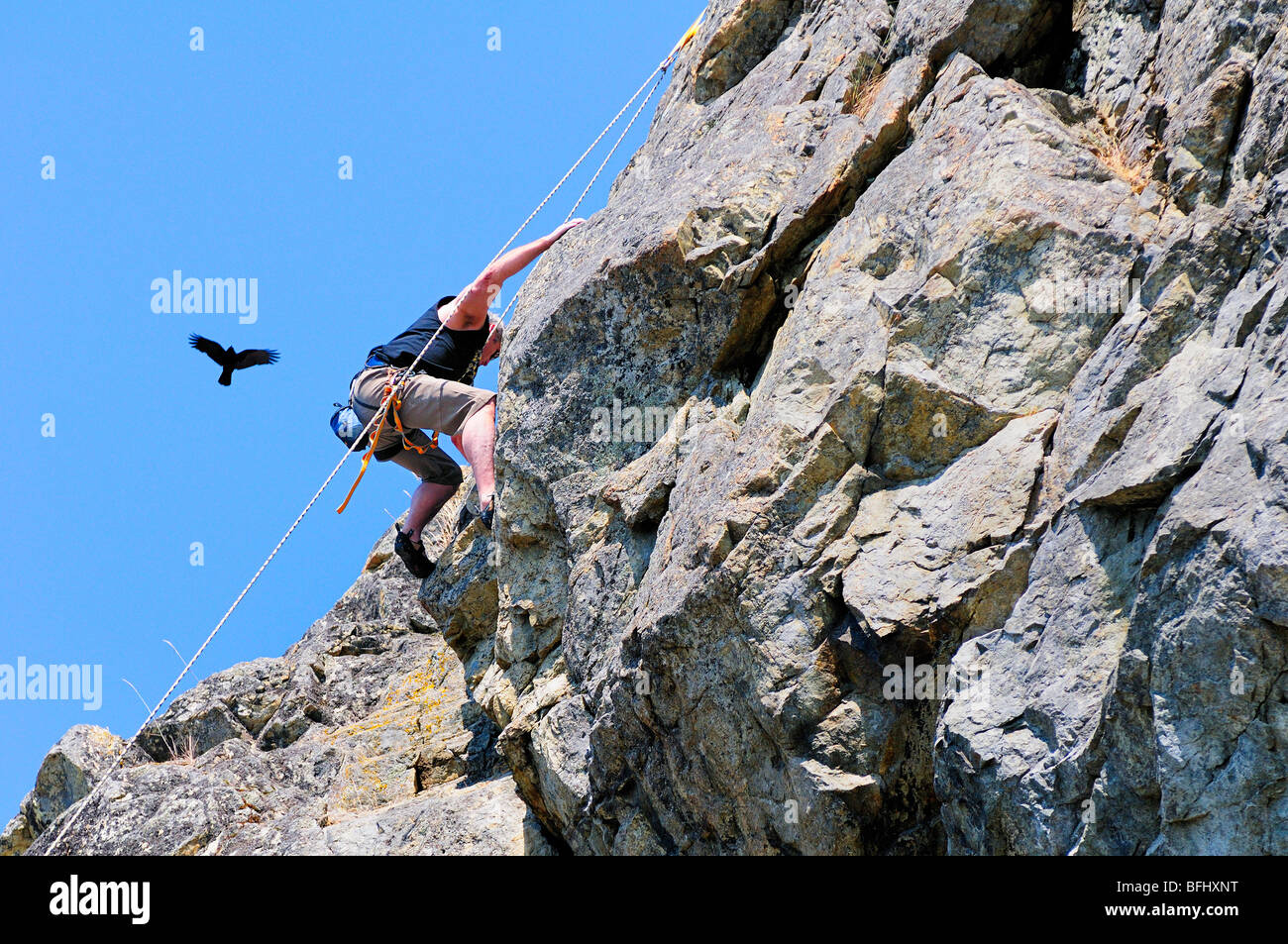 Rock climbing with a crow soaring overhead at McCauley Point Park in Victoria, BC. - Stock Image