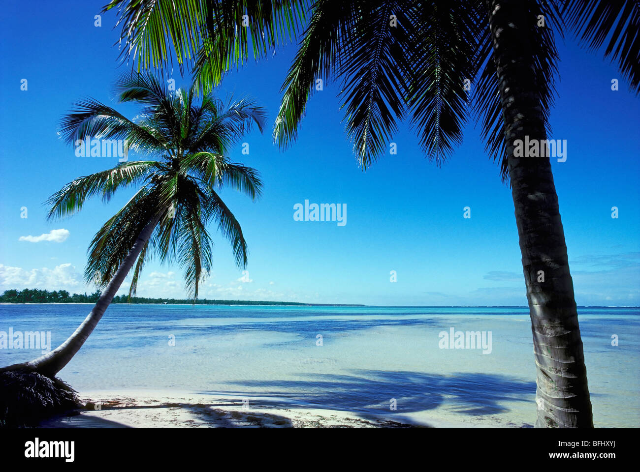 Palm trees on beach, Punta Cana, Dominican Republic - Stock Image