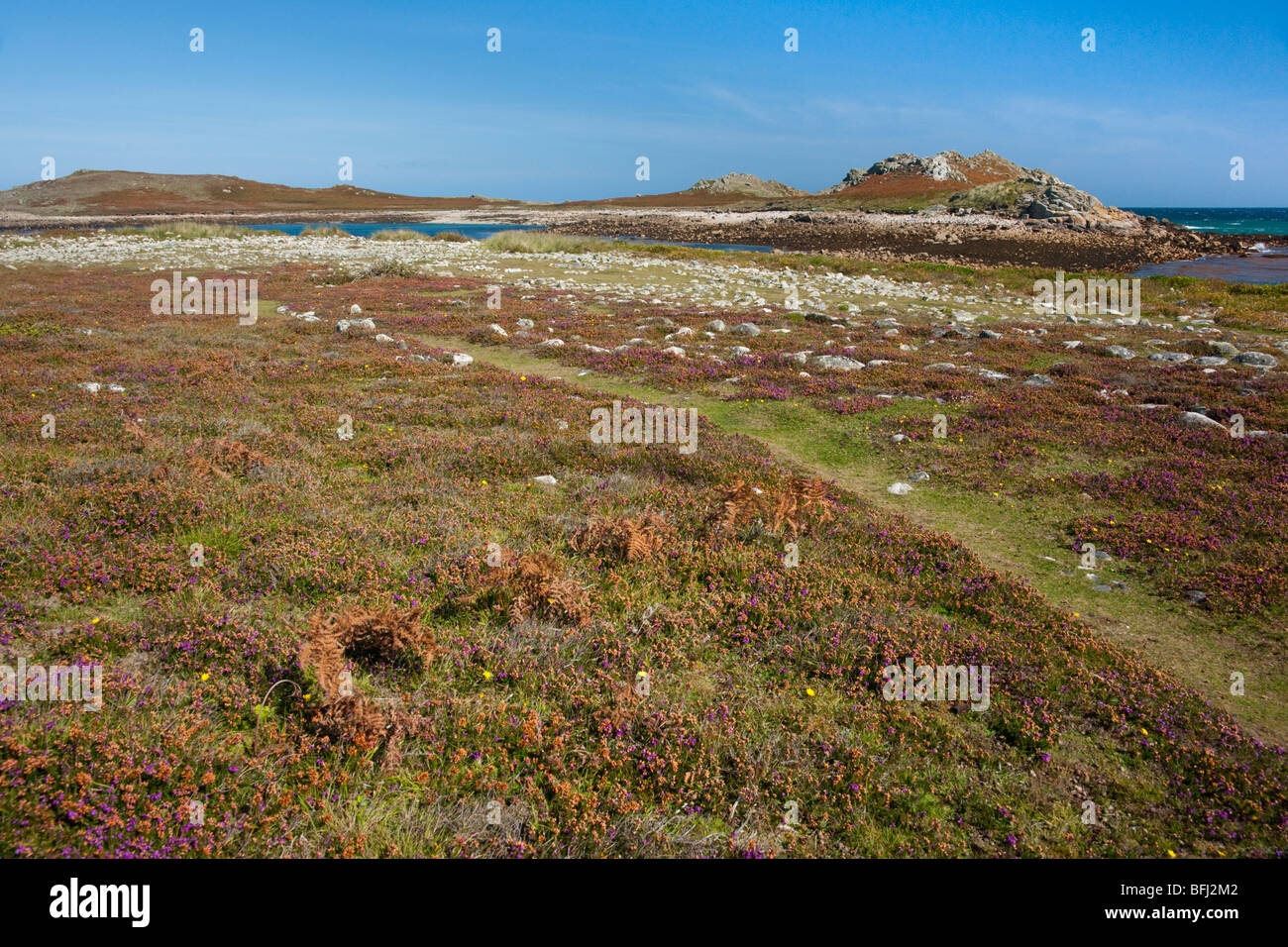 White Island viewed from St. Martin's, Isles of Scilly, looking over the mazes - Stock Image