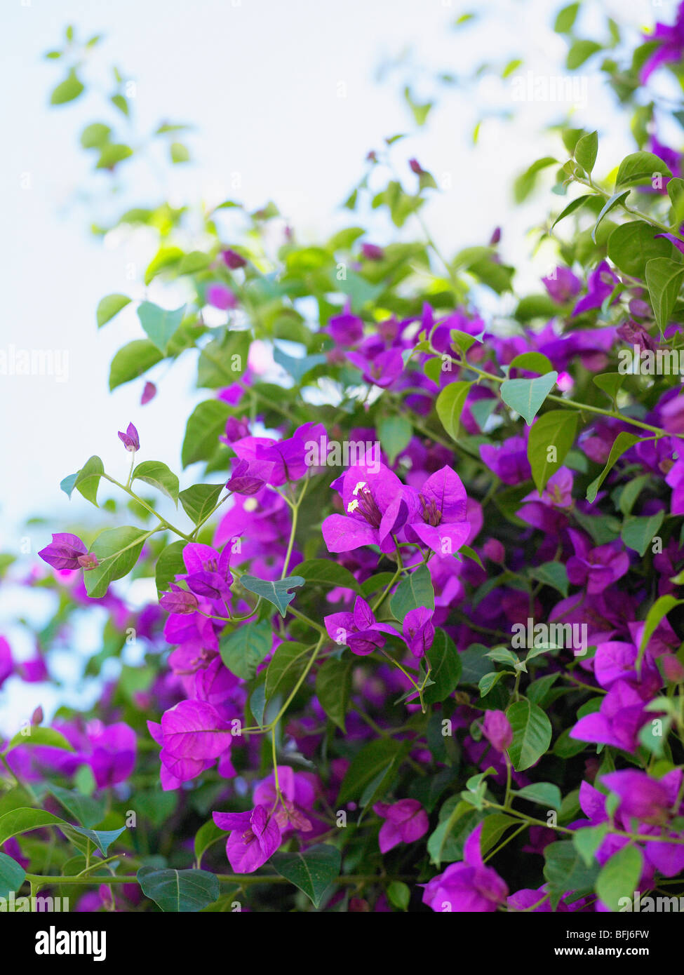 Clinging Vine Stock Photos Clinging Vine Stock Images Alamy