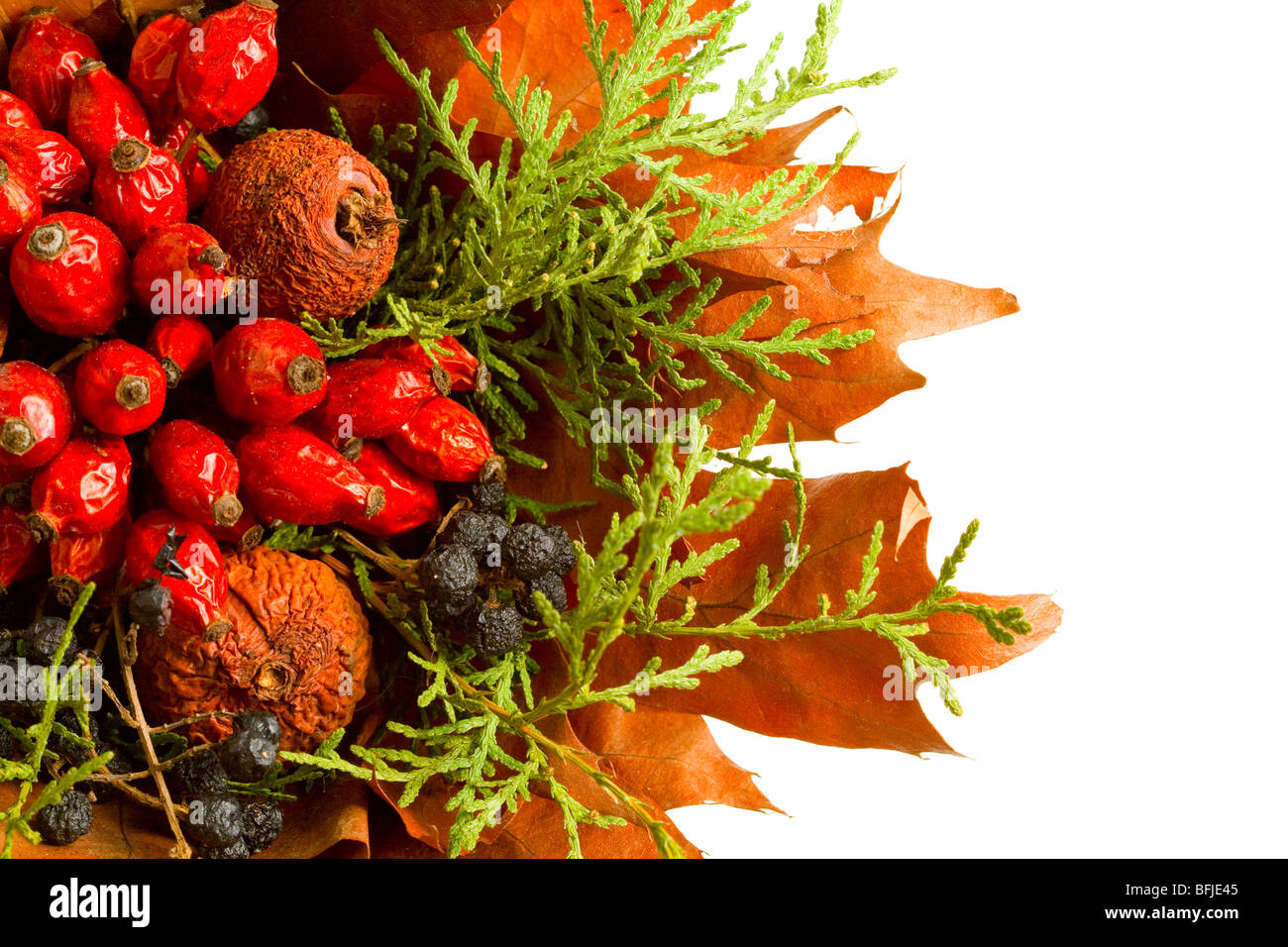 Dry autumn plants and fruits isolated on white - Stock Image