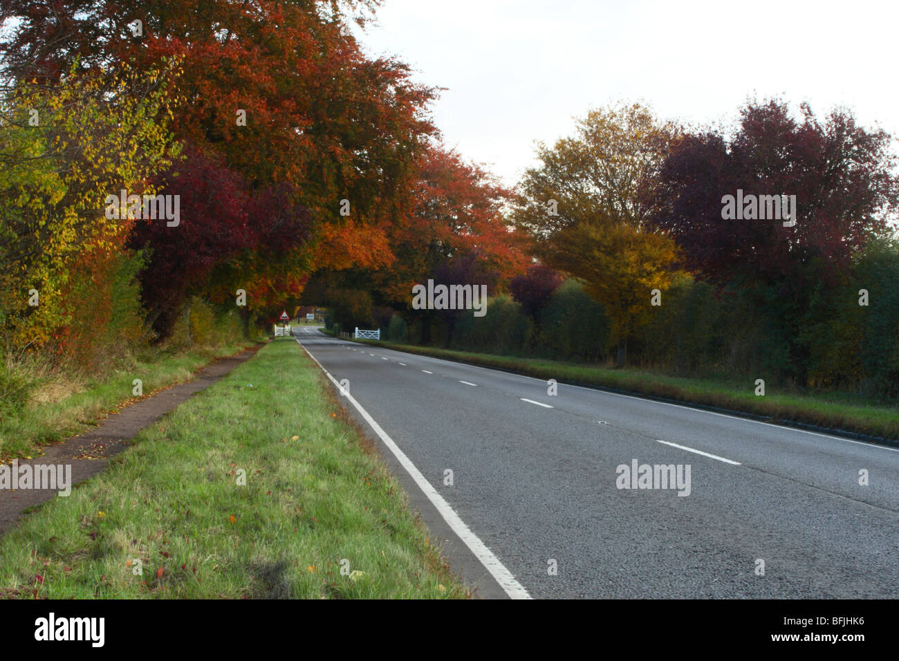 Autumn trees along the A40 entering West Wycombe, Buckinghamshire, United Kingdom - Stock Image