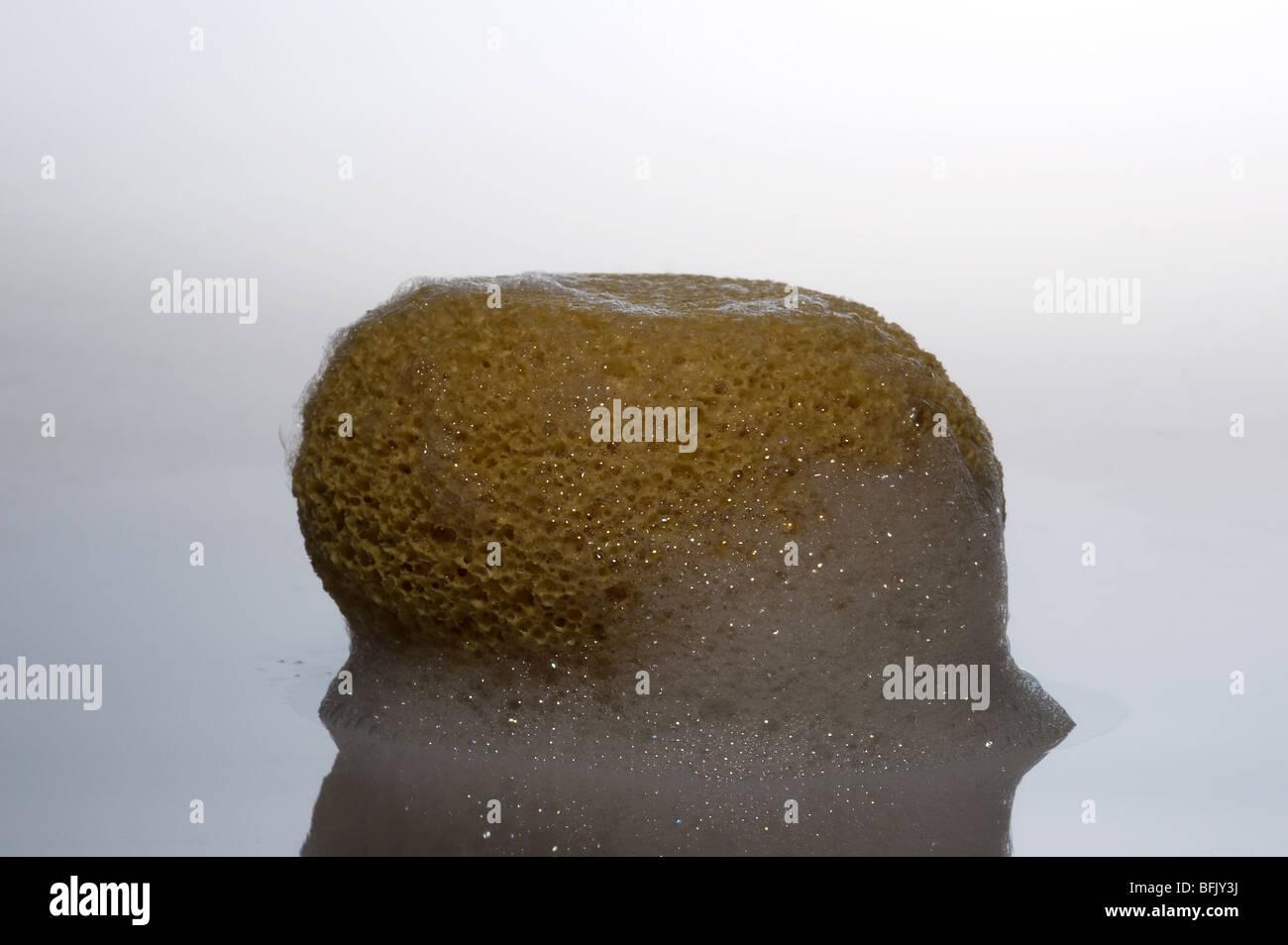 A lathery bath sponge. - Stock Image