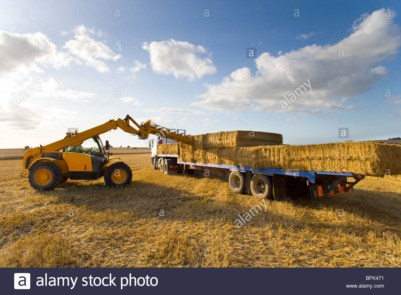 Tractor loading straw bales onto truck in sunny rural field - Stock Image