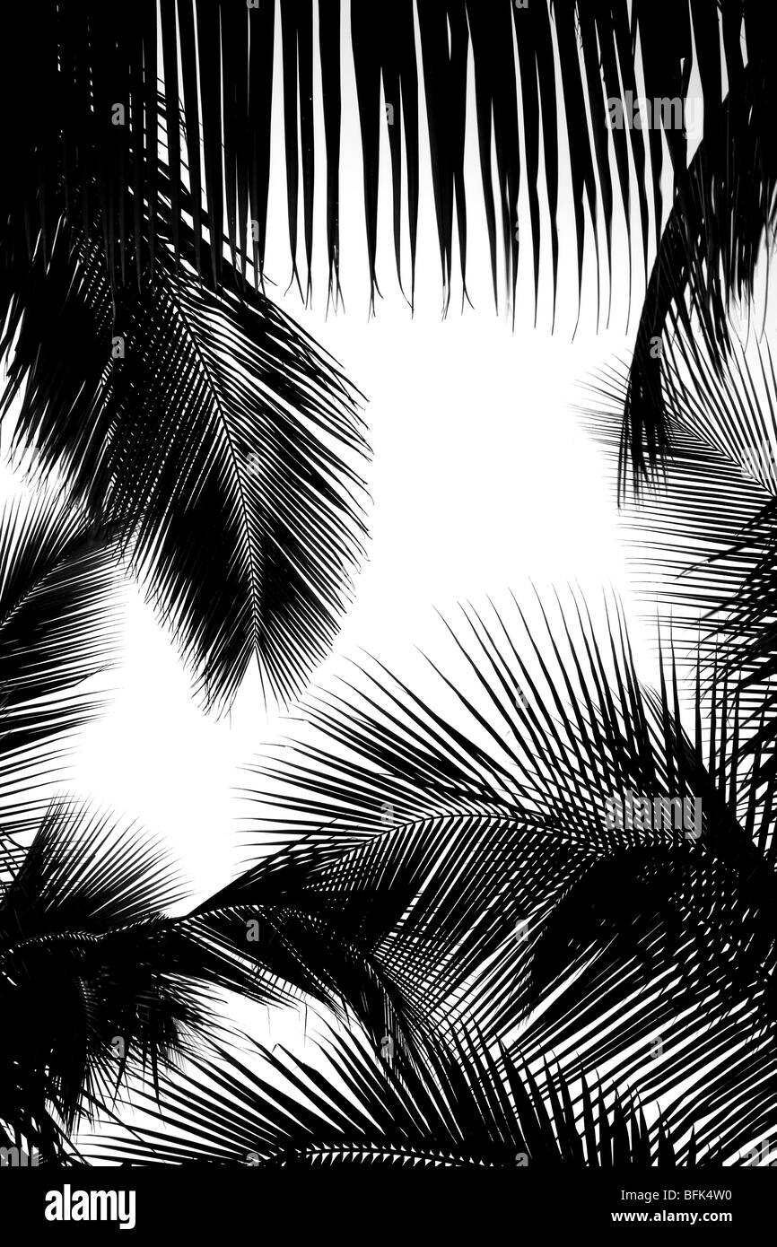 Black clear all filters page 1 of 28 palm leaf frame stock image