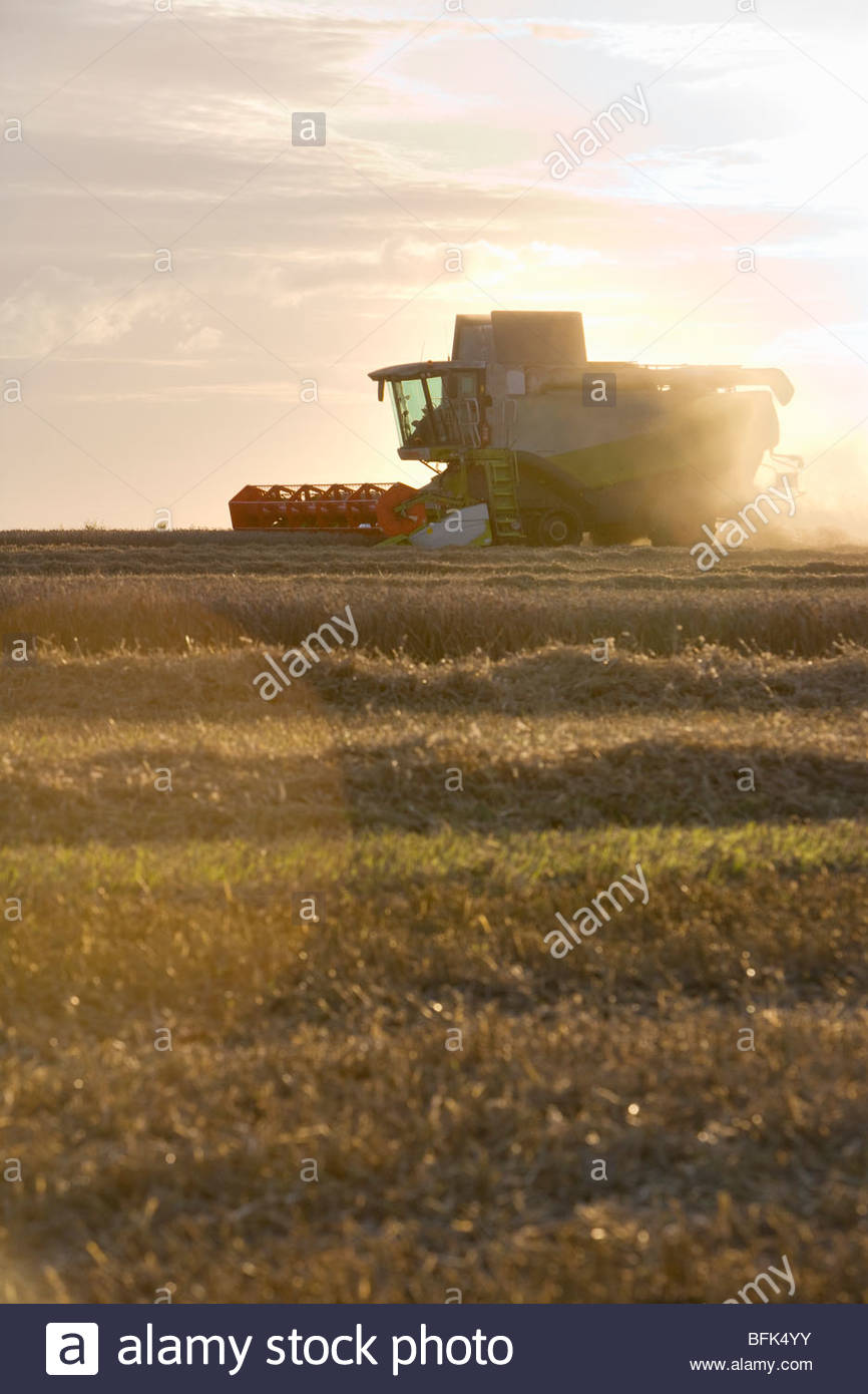 Combine harvesting wheat in sunny rural field - Stock Image