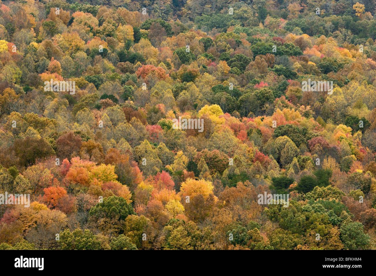 Autumn Color on Potter Flats in Breaks Interstate Park in Kentucky - Stock Image