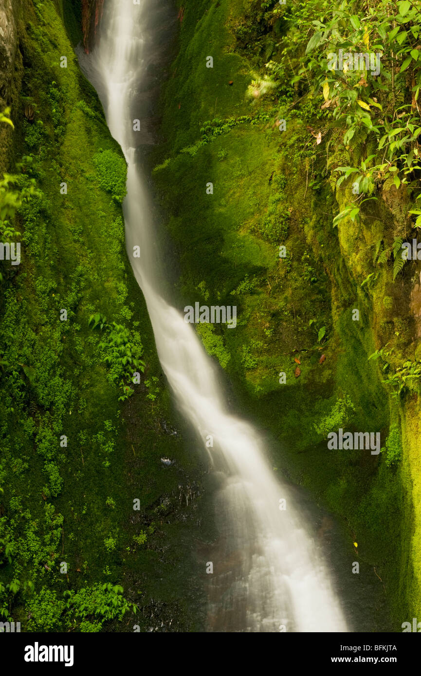 Waterfall, ca. 9000 feet, near Pele La Pass, BHUTAN - Stock Image