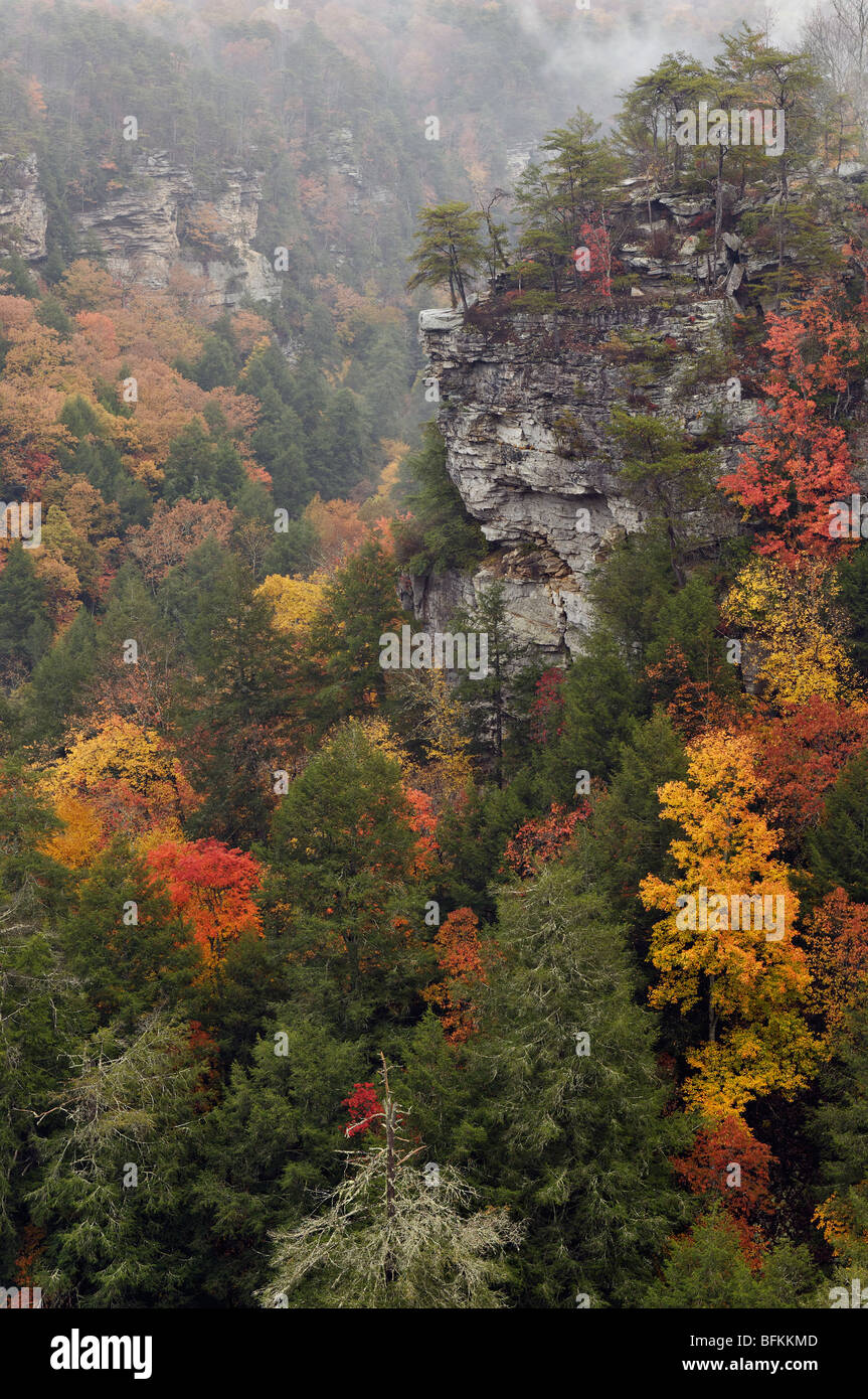 Mist and Autumn Color in Fall Creek Falls State Park in Tennessee Stock Photo