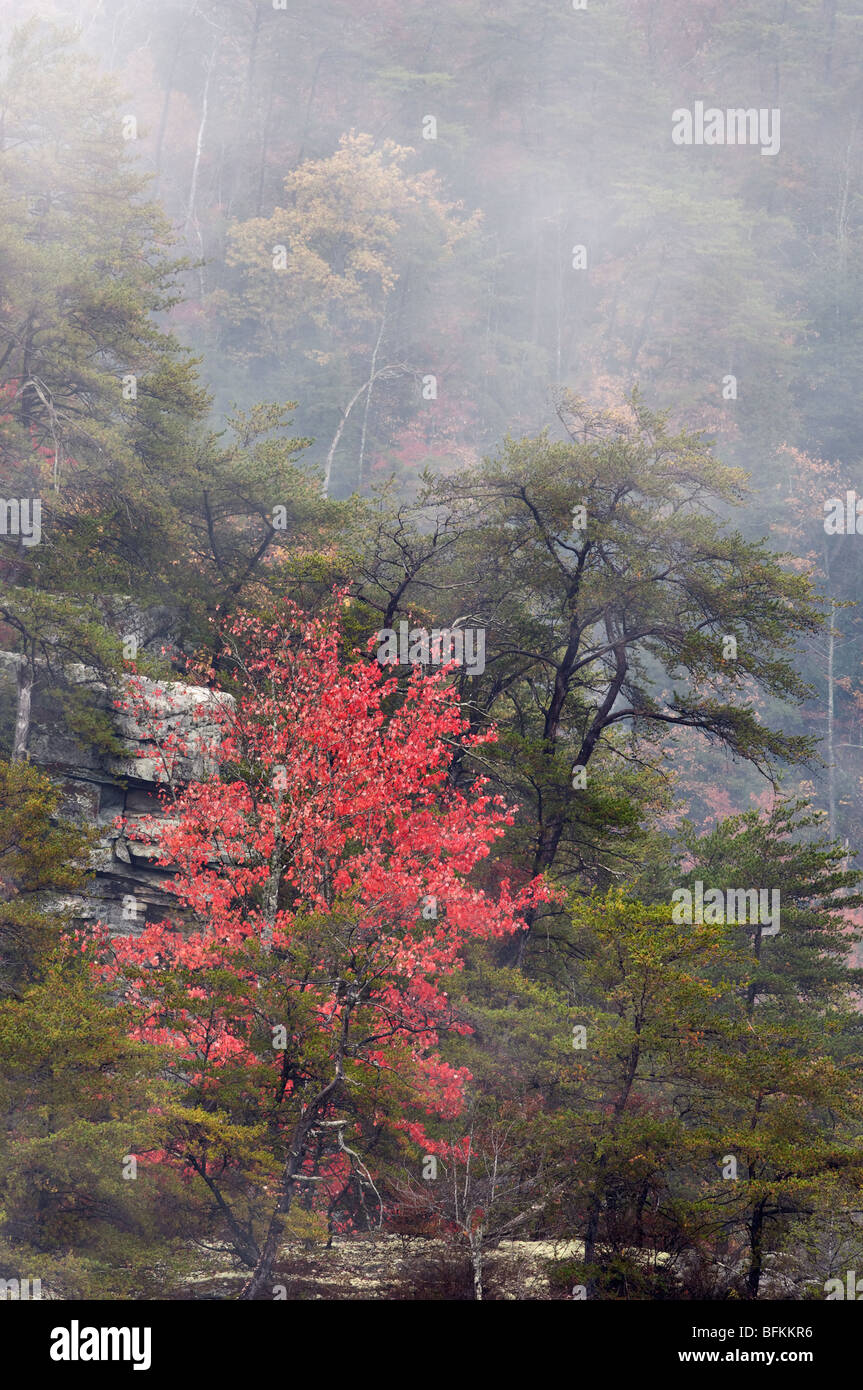 Autumn Color and Fog in Fall Creek Falls State Park, Tennessee Stock Photo