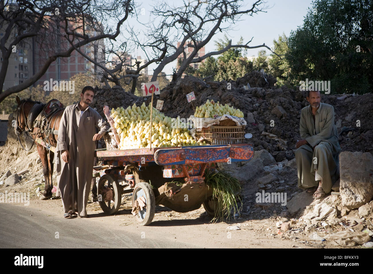 Fresh fruit salesmen with horse and cart shop on a road in central Cairo, Egypt - Stock Image