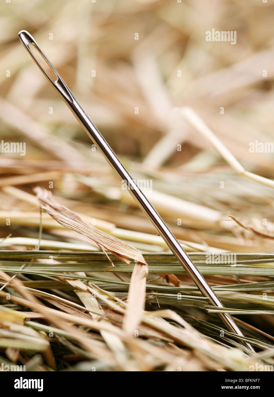 Needle is in a haystack - Stock Image
