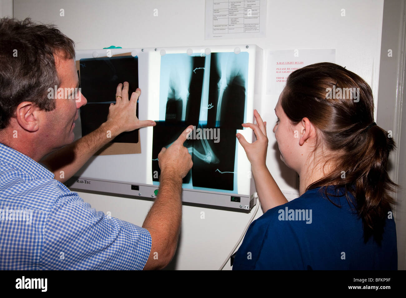 Veterinary Surgeons Examining X Rays - Stock Image