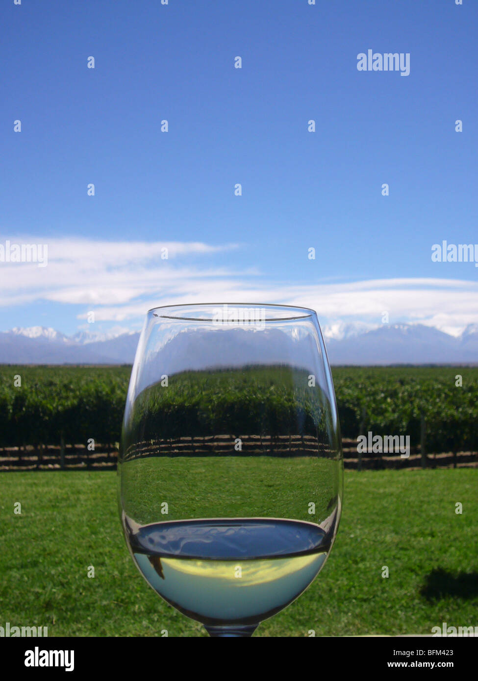 The vineyards of Ande Luna, with the Andes behind, as seen from the terrace of the vineyard through a glass of chardonnay. - Stock Image