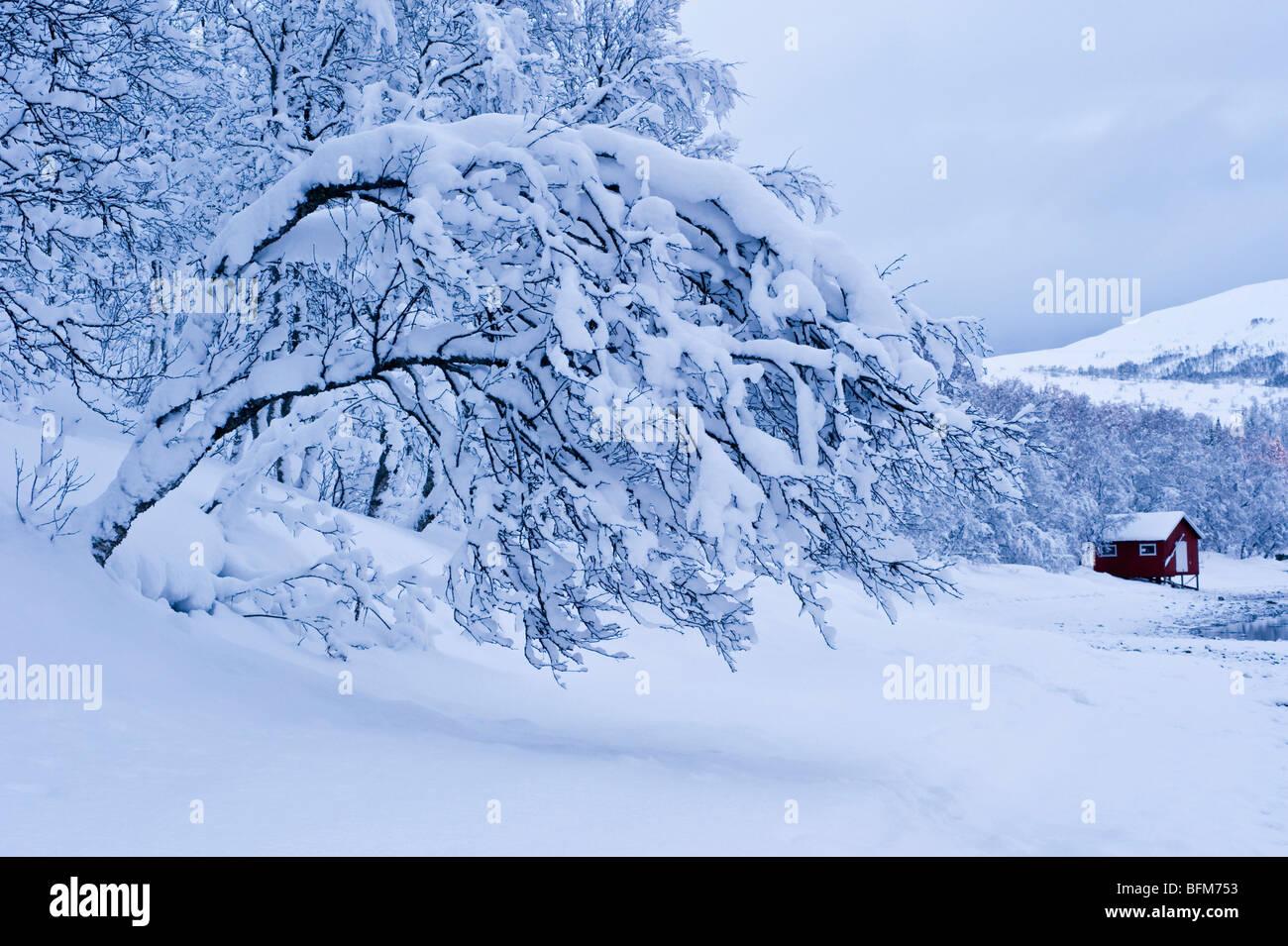 Heavy burden of snow on a tree - Stock Image