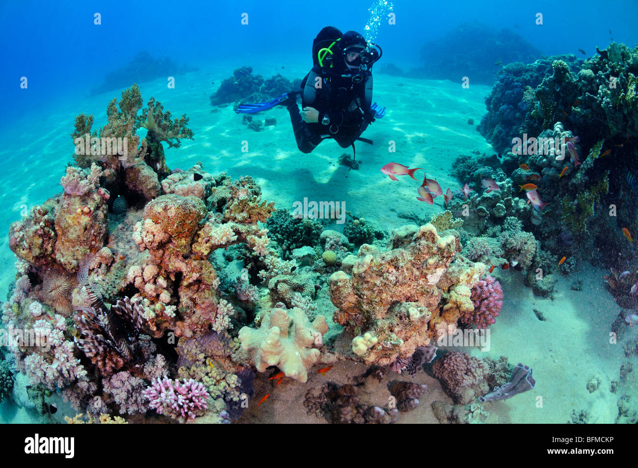 Scuba diver coral reef and colourful fish. 'Red Sea' - Stock Image