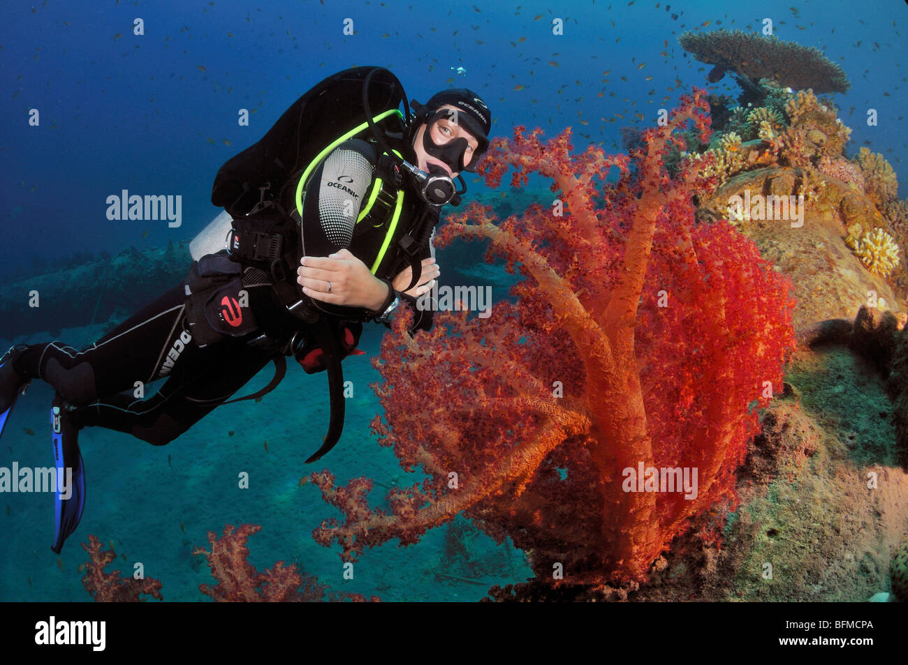 Scuba diver MFO Pipeline dive site with soft corals, Nuweiba, Red Sea, Egypt - Stock Image