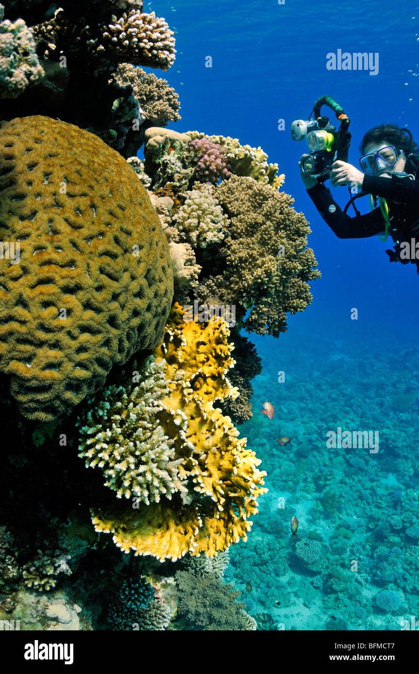 Scuba diver with camera on coral reef wall, 'Red Sea' - Stock Image