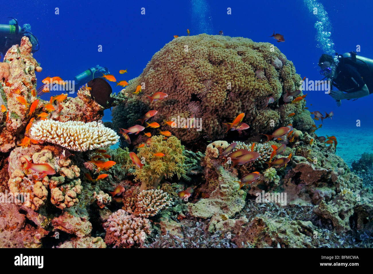 "Scuba divers on coral reef, ""Red Sea"" Stock Photo"