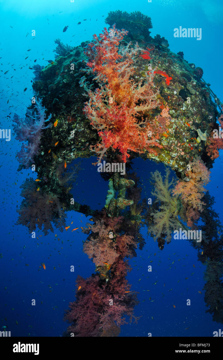Colourful soft coral and reflection of 'air pocket' at MFO 'The Sinkers' mooring buoy Nuweiba, Red - Stock Image