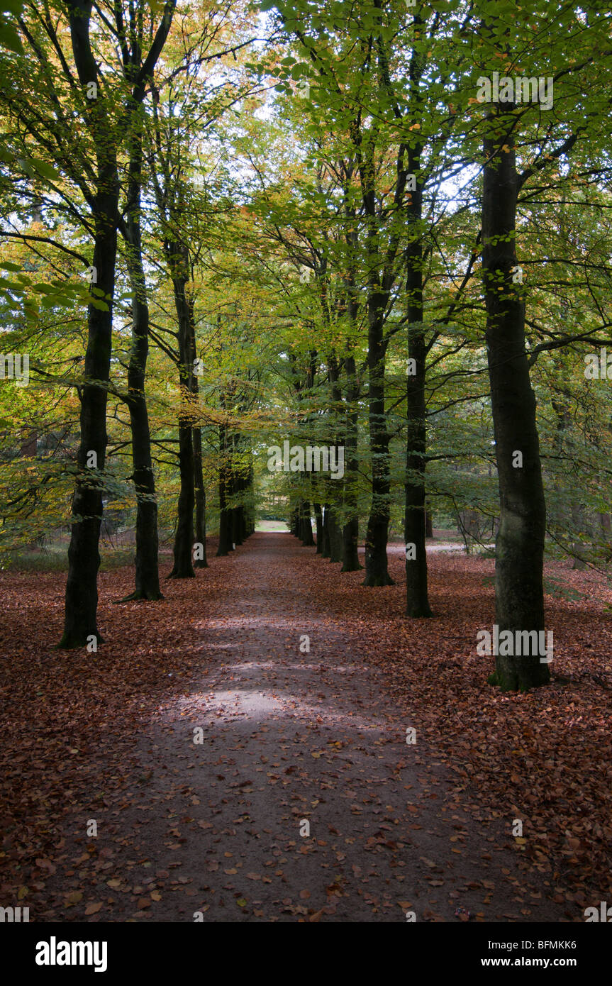 Netherlands  National Park De Hoge Veluwe,  woodland - Stock Image