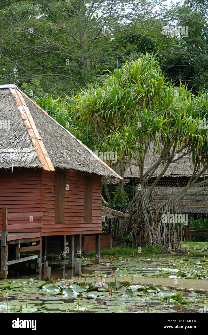 Brunei House & Pandanus pulcher Palm, from SW Sabah, Sabah State Musem Botanical Gardens, Kota Kinabalu, Sabah, - Stock Image