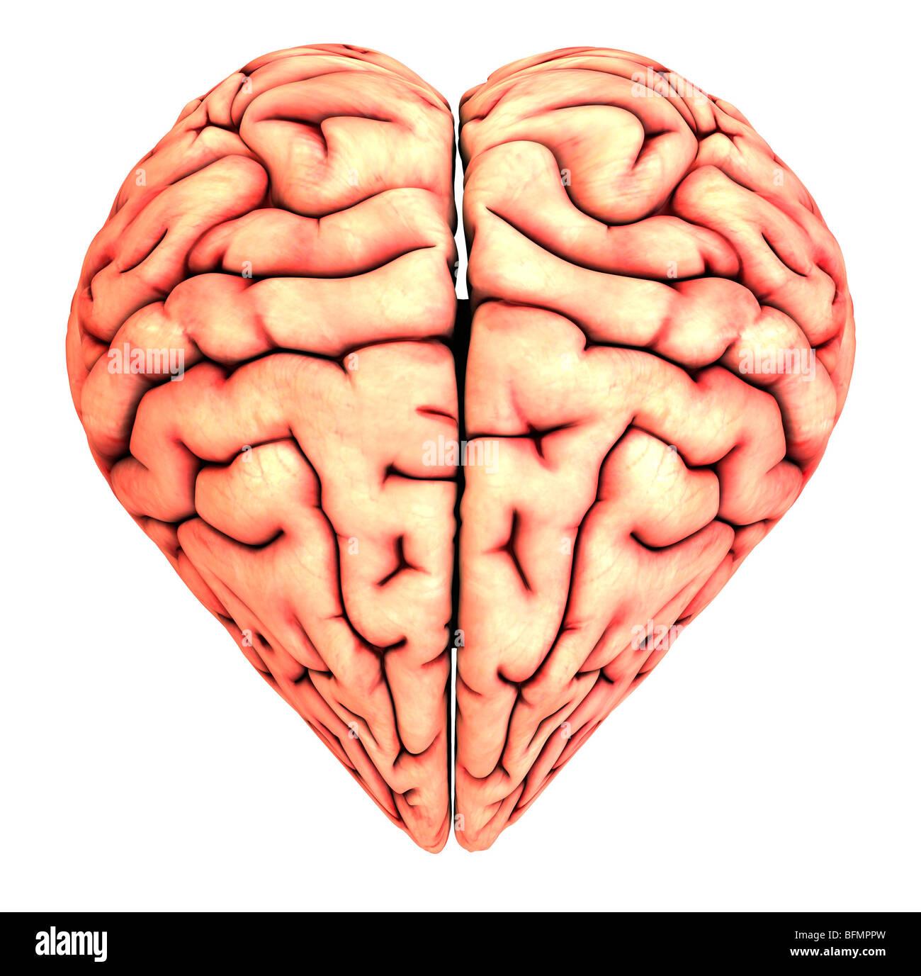 Heart-shaped brain, conceptual artwork Stock Photo: 26887137 - Alamy