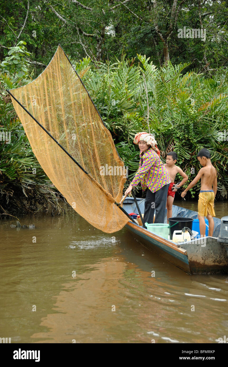 Sabah Fisher Woman & Sons Shrimp Fishing from Boat with Net in Klias Mangrove Wetlands, Sabah, Malaysia, Borneo - Stock Image