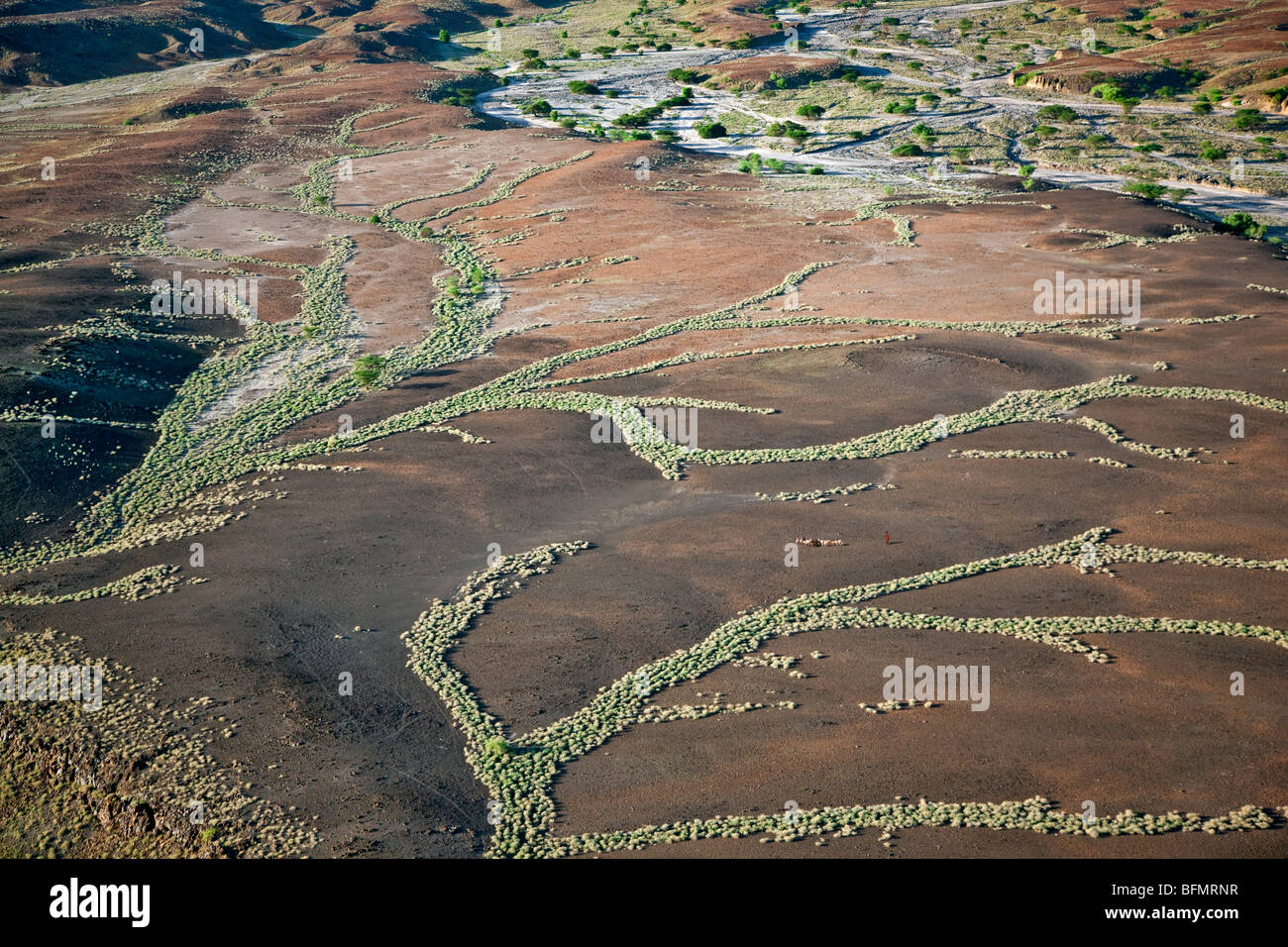A Turkana girl herds goats through inhospitable country where the only vegetation is found along seasonal water - Stock Image