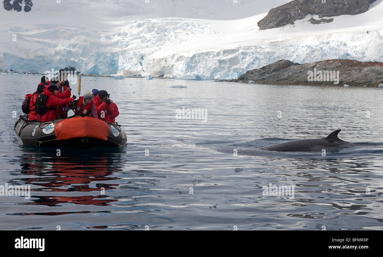 Antarctica, Paradise Harbour, in inquisitive Minke Whale investigates an expedition ships zodiac and its passsengers - Stock Image