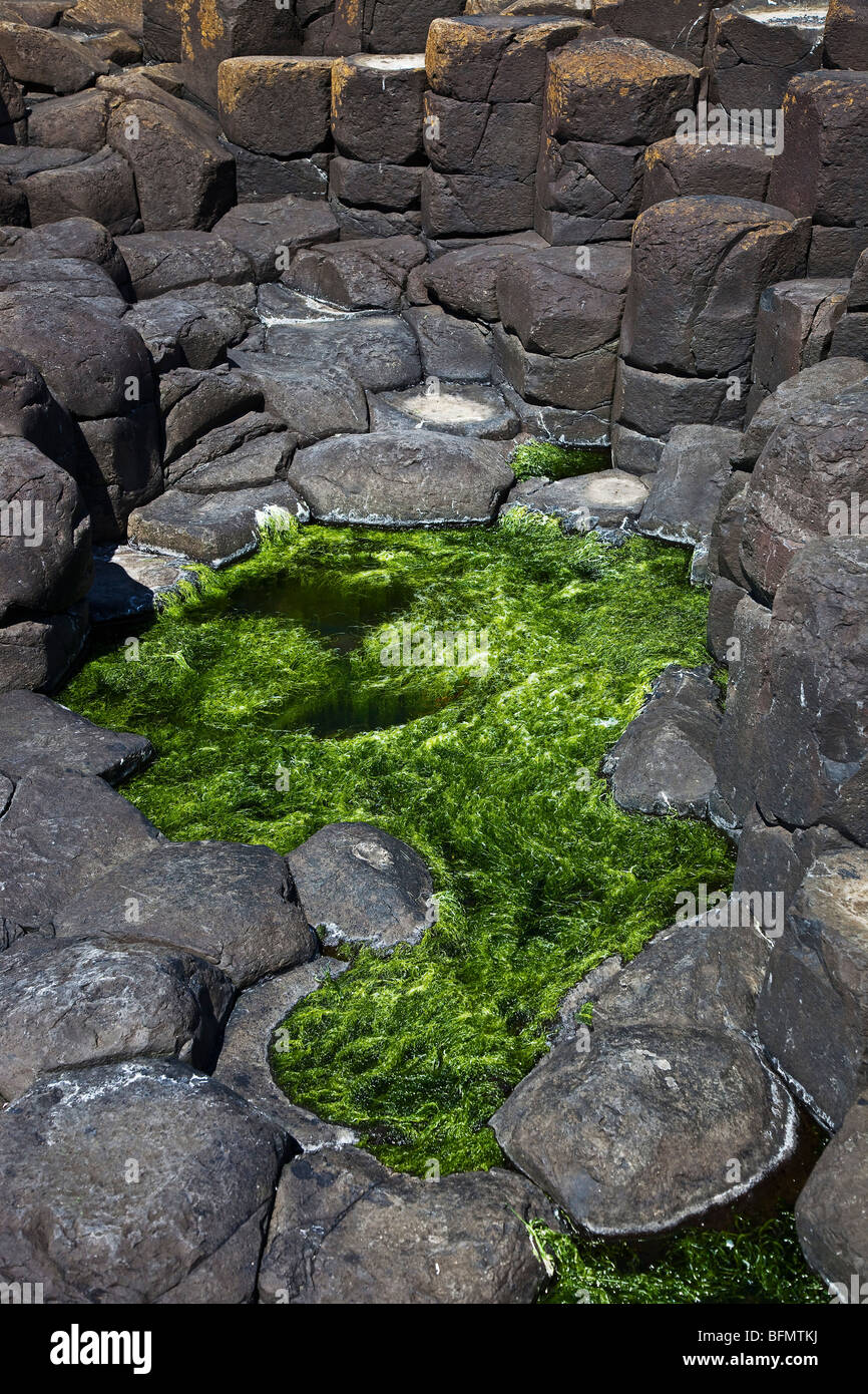 United Kingdom, Northern Ireland, Antrim, Aird, rock pool and basalt rocks at the Giants Causeway. - Stock Image