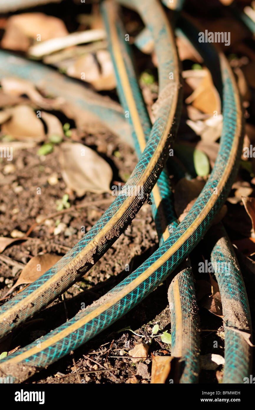 Coiled dirty hosepipe lying in the garden - Stock Image