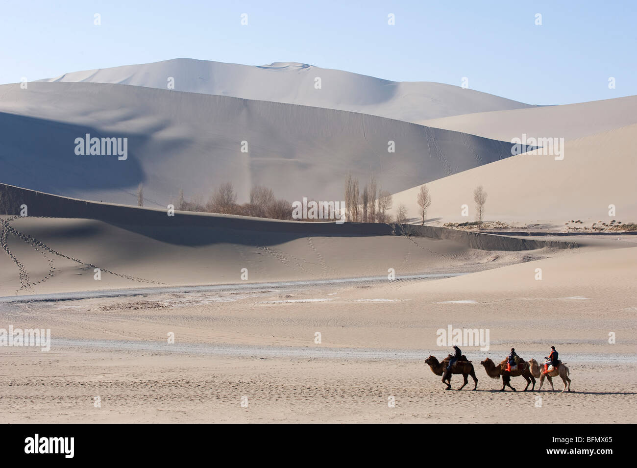 China, Gansu Province, Dunghuang, camels in Ming Sha sand dunes - Stock Image