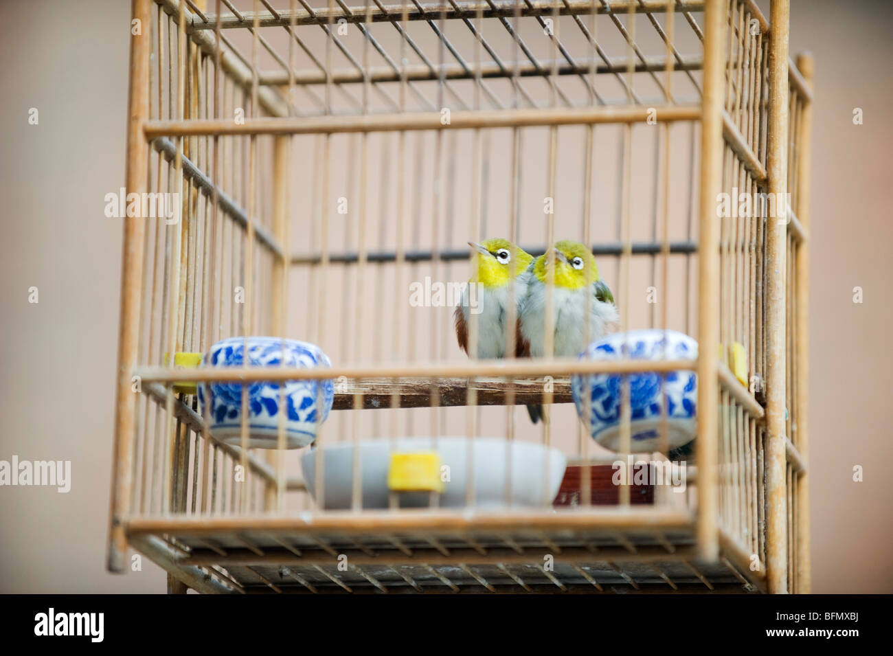 China, Shaanxi Province, Xian, birds in a cage - Stock Image