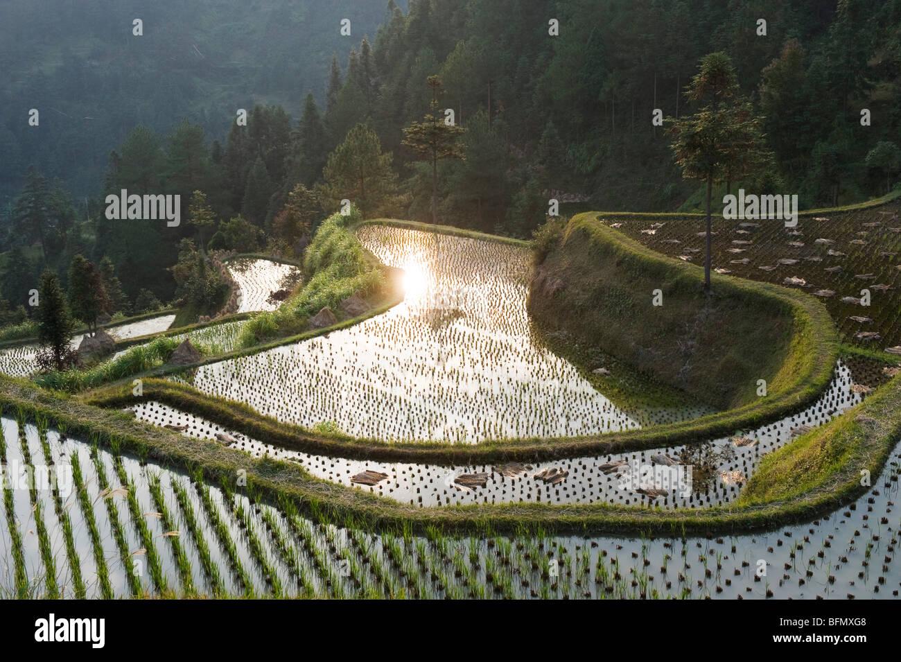 China, Guizhou Province, Langde village, rice fields Stock Photo