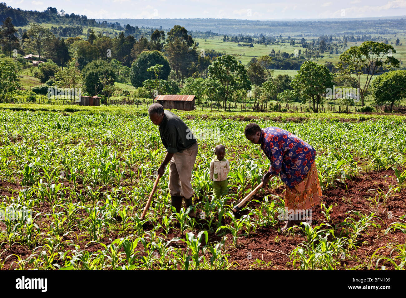Kenya, Kapsabet District. A morning rural scene with an elderly couple accompanied by their grandson weeding a field - Stock Image