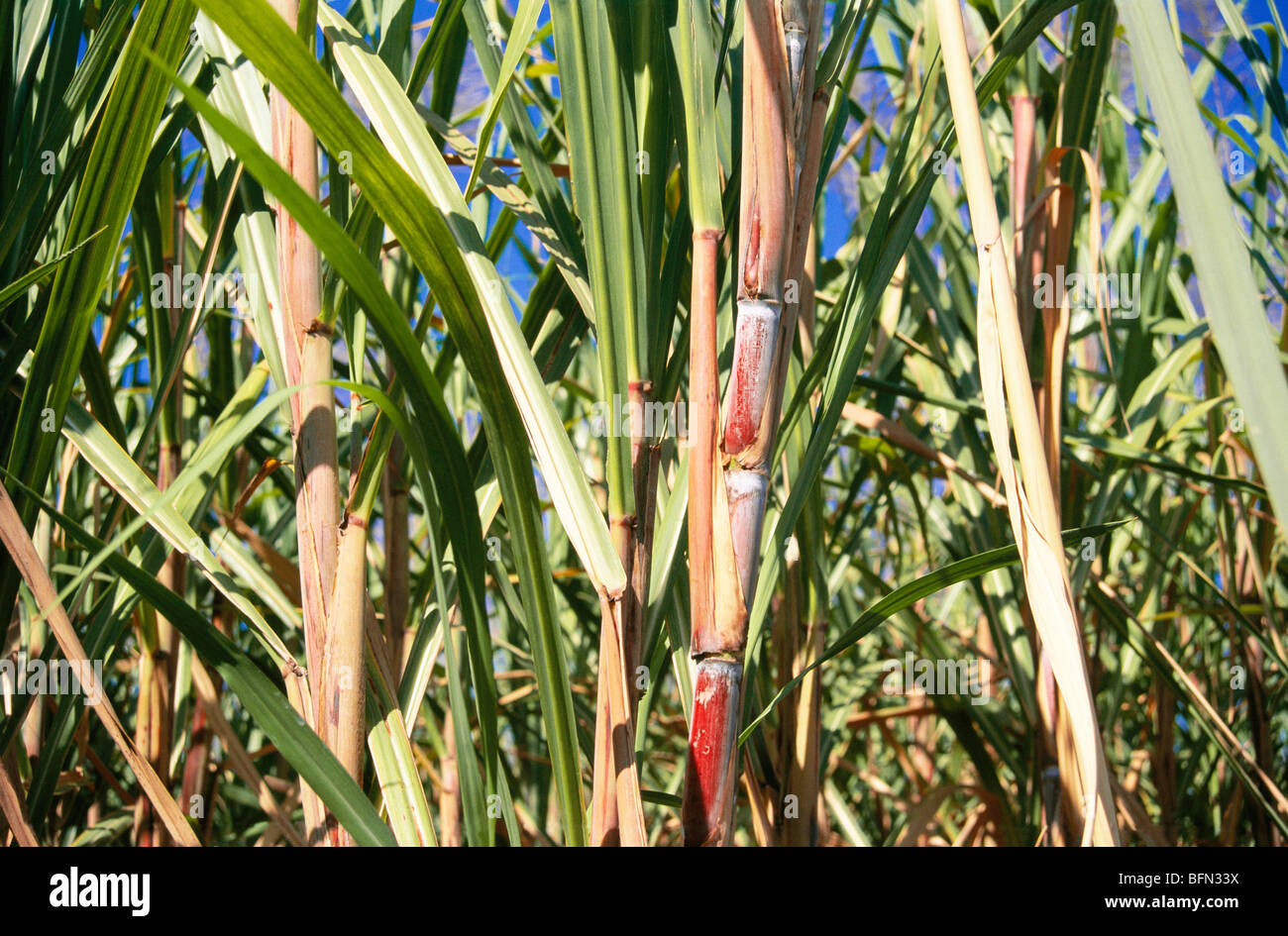 AGRI SEARCH (INDIA) PRIVATE LIMITED - Zauba Corp