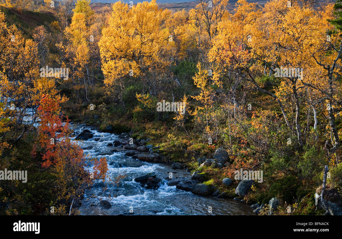 Sweden Jämtland Storulvån fjell and forest and mountain stream in autumn - Stock Image