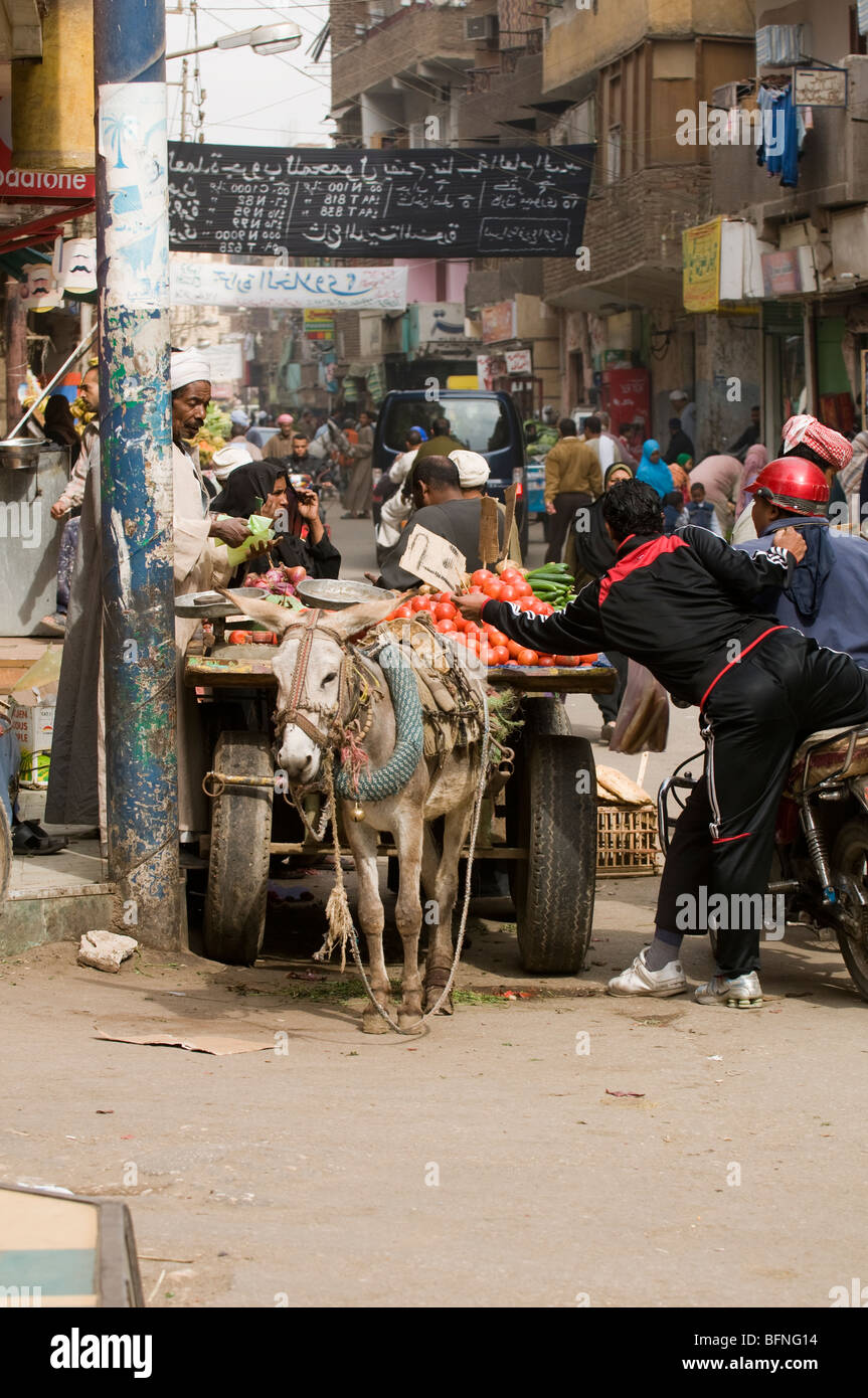 Vendor sells tomatoes from donkey cart in the souk in Luxor Egypt. - Stock Image