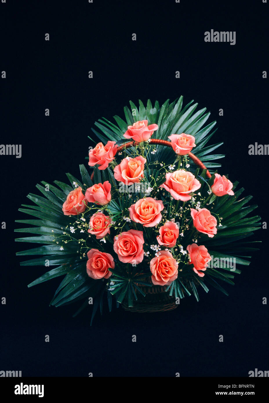 BDR 63001 : sixteen pink roses flower arrangement in bouquet on black background - Stock Image